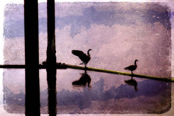 Bird Art Print featuring the photograph Geese At Dawn by Carol Leigh