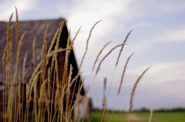 Farm Art Print featuring the photograph Glancing Back At A Memory by Kelly Reich
