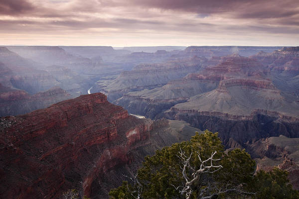 National Park Art Print featuring the photograph Gnarly Tree In The Canyon by Andrew Soundarajan