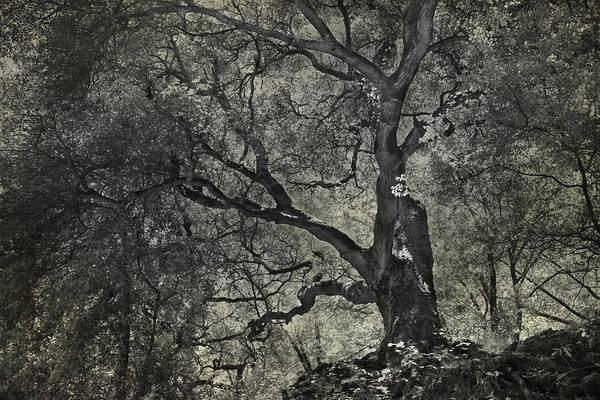 Trees Art Print featuring the photograph Grabbing by Laurie Search