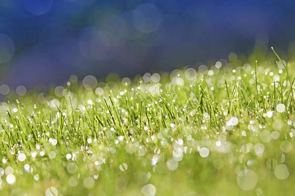 Horizontal Art Print featuring the photograph Grass, Close-up by Tony Cordoza