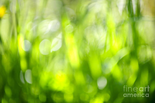 Green Art Print featuring the photograph Green Grass In Sunshine by Elena Elisseeva
