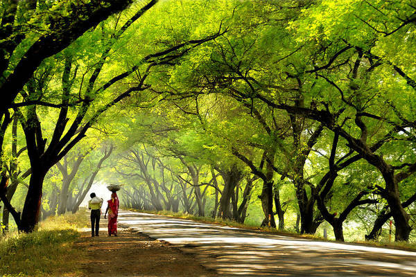 Landscape Art Print featuring the photograph Green Tunnel by C R Shelare