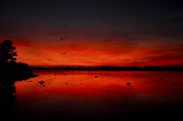 Herons Art Print featuring the photograph Herons At Night by Donnie Smith