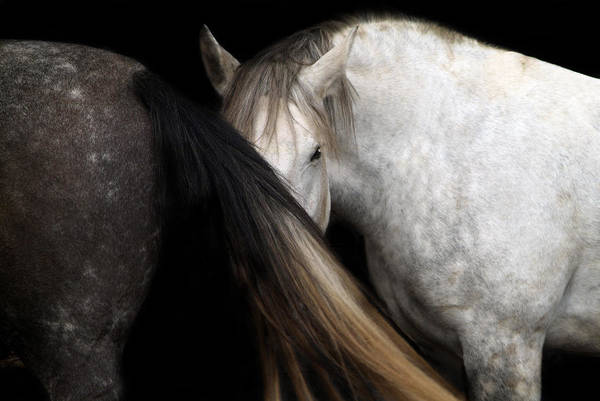 Equine Art Print featuring the photograph Hiding From The Truth by Maggie Dee
