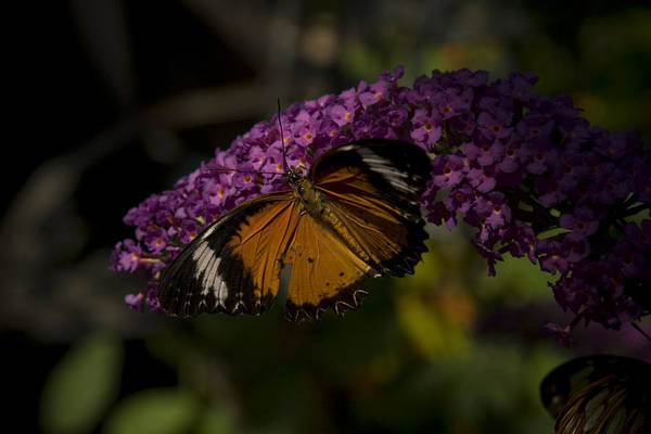 Butterfly Art Print featuring the photograph Home Sweet Home by Stacy Lenz