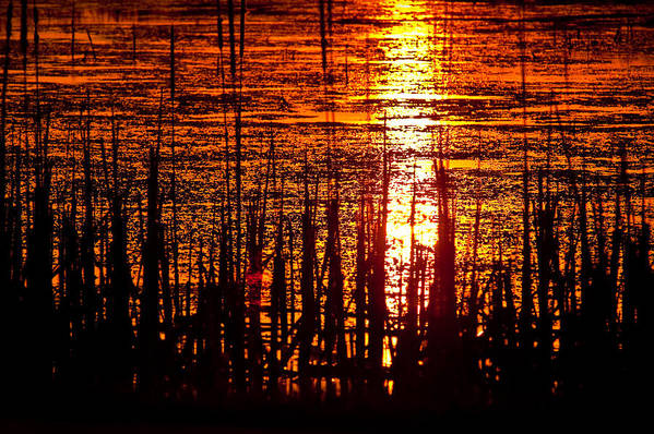 Horicon Print featuring the photograph Horicon Marsh Sunset Wisconsin by Steve Gadomski