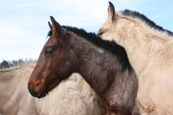 Horse Art Print featuring the photograph Horse Pileup by Wendi Curtis