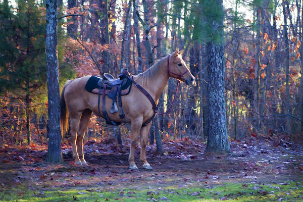 Horse Art Print featuring the photograph Horse Waiting For Rider by Kathy Clark