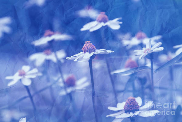 Daisies Art Print featuring the photograph Imagine 06ht01 by Variance Collections