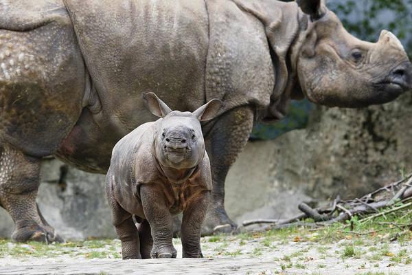 Mp Print featuring the photograph Indian Rhinoceros Rhinoceros Unicornis by Konrad Wothe
