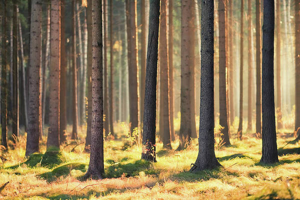Horizontal Print featuring the photograph Indian Summer In Woods by Matthias Haker Photography