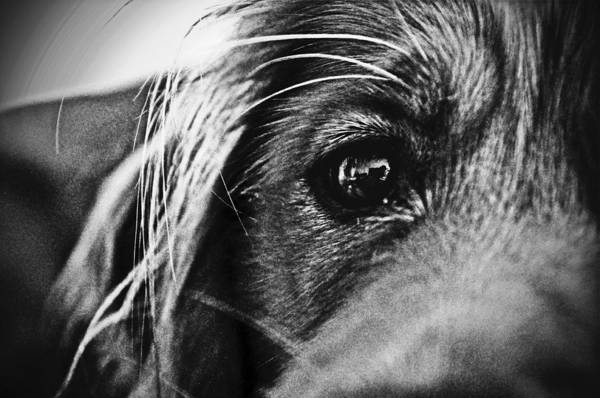 Dog Art Print featuring the photograph Into Her Eyes by Jacqueline Valenzuela