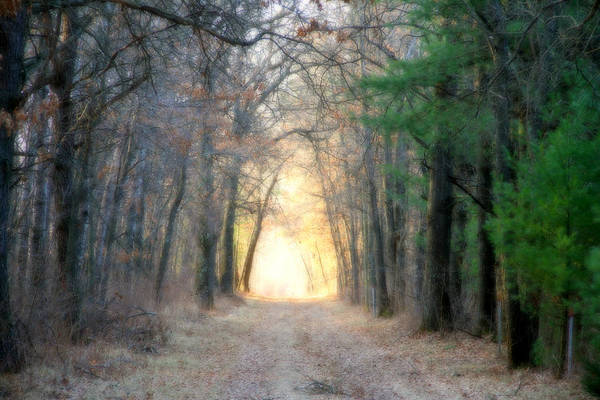 Woods Art Print featuring the photograph Into The Woods by Mark J Seefeldt
