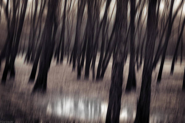 Tree Art Print featuring the photograph It Rained Today by Gray Artus