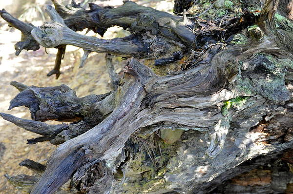 Landscape Art Print featuring the photograph Kentucky Tree Stump by Rosemary Legge