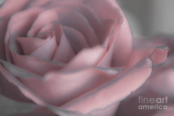 Rose Art Art Print featuring the mixed media Laced by Kim Henderson