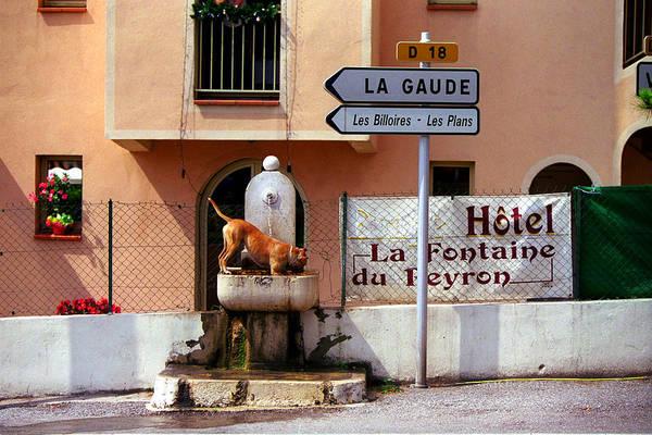 Provence Art Print featuring the photograph Le Chien De Sophie by John Galbo