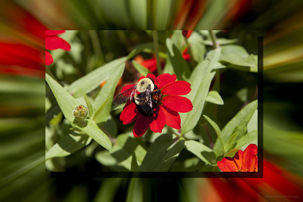 Flower Art Print featuring the photograph Let It Bee by Charles Warren