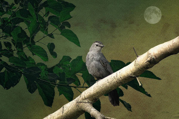 Nature Art Print featuring the photograph Little Bird by Tom York Images