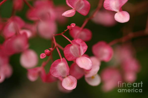 Red Art Print featuring the photograph Little Red Hearts by Pamela Corey