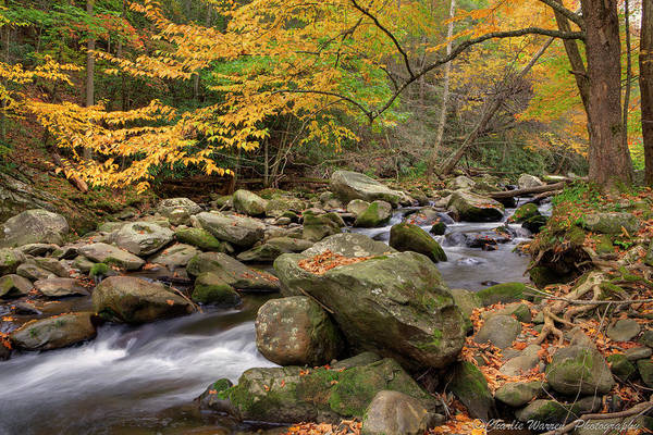 Great Smoky Mountains Art Print featuring the photograph Little River I by Charles Warren