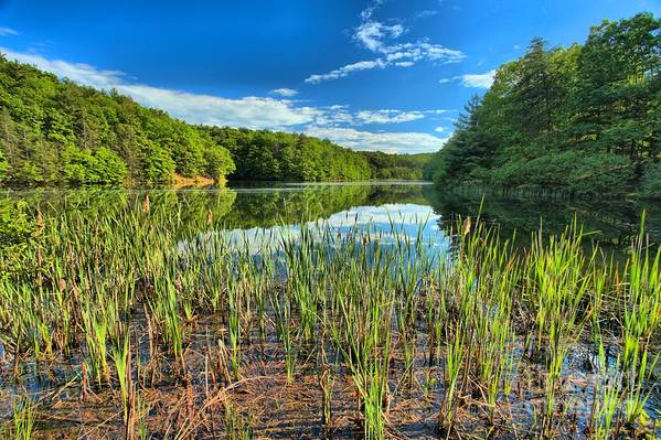 Long Branch Lake Art Print featuring the photograph Long Branch Lake Marsh by Adam Jewell