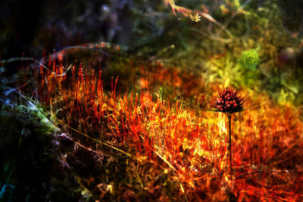 Moss Art Print featuring the photograph Magical Moss by Michele Cornelius