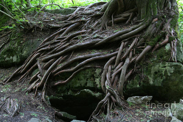 Roots Art Print featuring the photograph Magical Tree Roots by Chris Hill