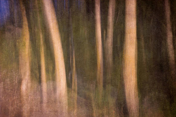 Landscapes Art Print featuring the photograph Magical Wood by Guido Montanes Castillo