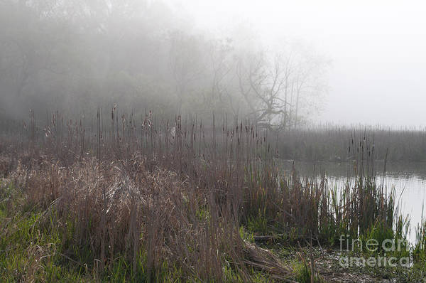 Marsh Art Print featuring the photograph Mclaughlin Bay In The Fog Bulrushes by Gary Chapple