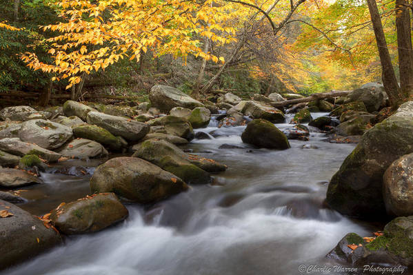 Little River Art Print featuring the photograph Mid Stream by Charles Warren