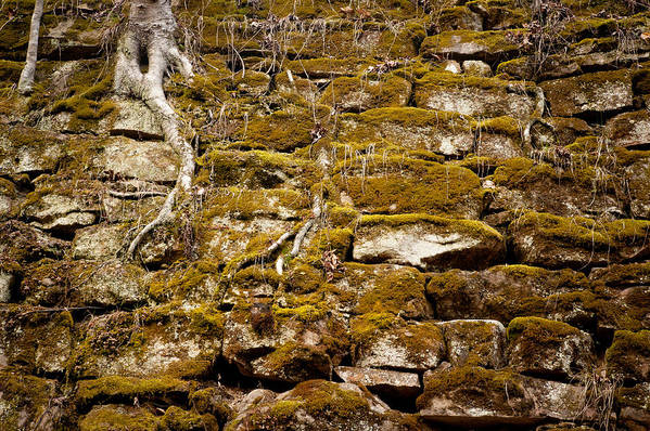 Rocks Art Print featuring the photograph Mossy Wall by Marion Wear