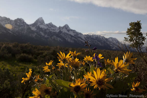 Flowers Art Print featuring the photograph Mountain Flowers by Charles Warren