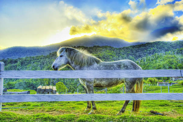 Landscape Art Print featuring the photograph Mountain Pony by Calvin Teh