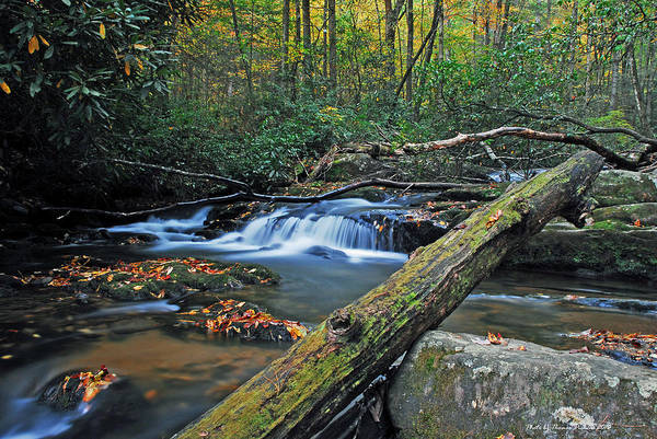 Mountains Art Print featuring the photograph Mountain Stream by Thomas Pickens