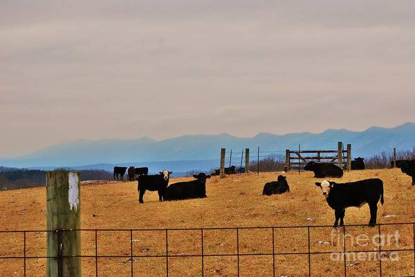 Art Print featuring the photograph Mtnsteer by TSC Photography Timothy Cuffe Jr