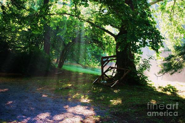 Art Print featuring the photograph Mystic Tree by TSC Photography Timothy Cuffe Jr