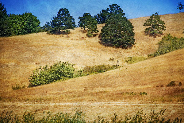 Mixed Media Art Print featuring the photograph Oaks On Grassy Hill by Bonnie Bruno