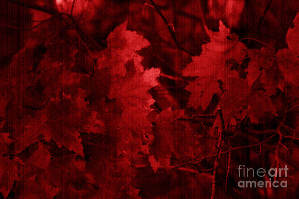 Leaf Art Print featuring the photograph Old Red by Marjorie Imbeau