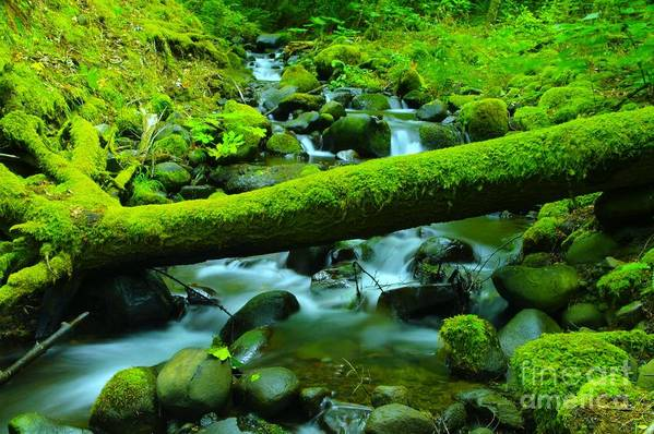 Water Art Print featuring the photograph Paradise Of Mossy Logs And Slow Water  by Jeff Swan