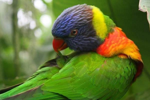 Parrot Art Print featuring the photograph Parrot by Katie Mann