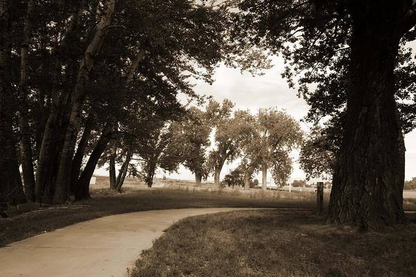 Nature Art Print featuring the photograph Pathways by Leah Green