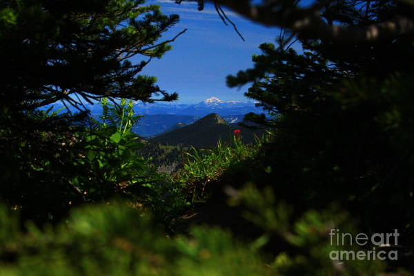 Mount Baker Art Print featuring the photograph Peek A Boo by Angela Q