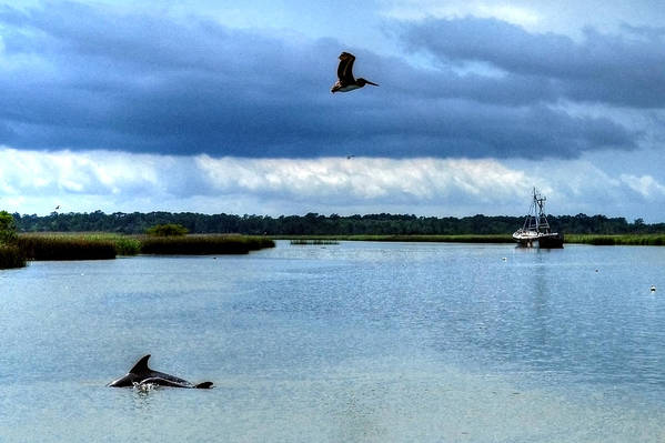 Pelican Art Print featuring the photograph Pelican Porpoise And Pirate Ship by Michael Athorn