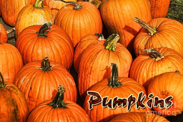 Pumpkins Art Print featuring the photograph Pumpkin Card by Randy Harris