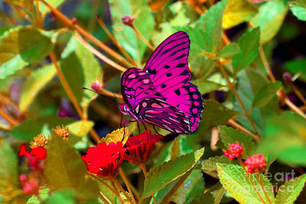 Butterfly Art Print featuring the photograph Purple Beauty by Monica Poole
