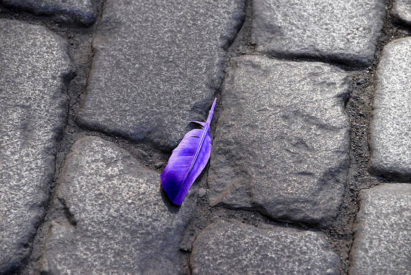 Stockholm Sweden Art Print featuring the photograph Purple Feather by Larry Mulvehill