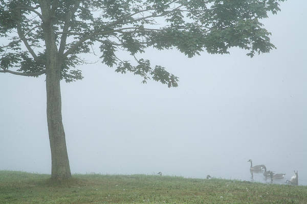 Fog Art Print featuring the photograph Quiet Fog Rolling In by Karol Livote