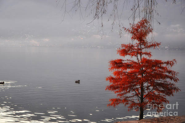 Tree Art Print featuring the photograph Red Tree On The Lake Front by Mats Silvan
